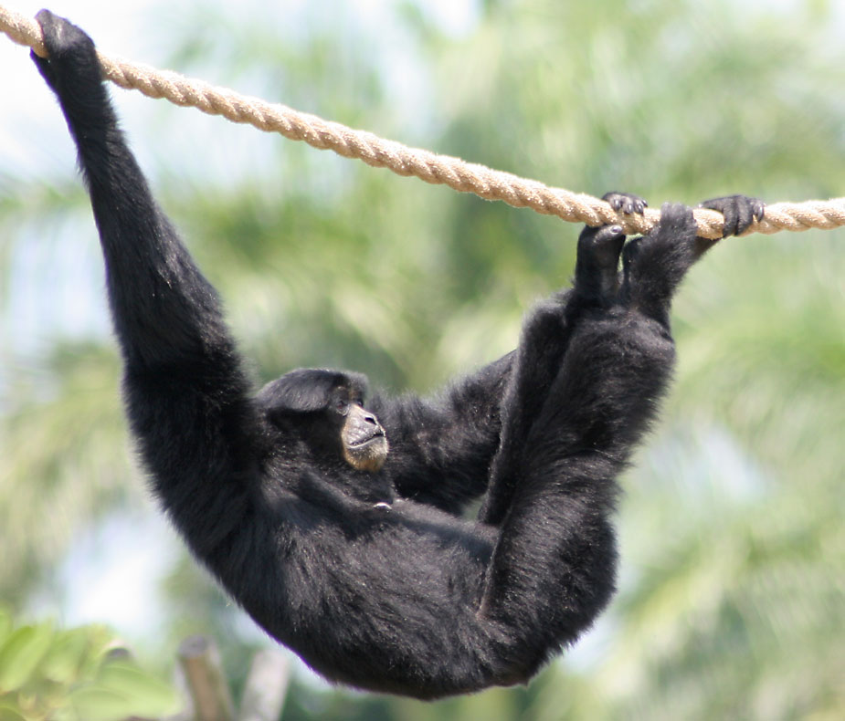 About enso monkey for Ink monkey press